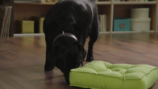 Hill's Science Diet Perfect Weight Adult Dog Food - image 4 from the video