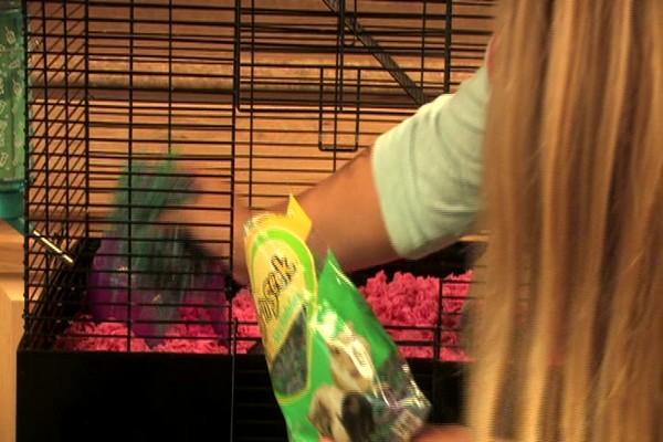 SYRAN HAMSTER - Carefresh happy habitat  - image 6 from the video