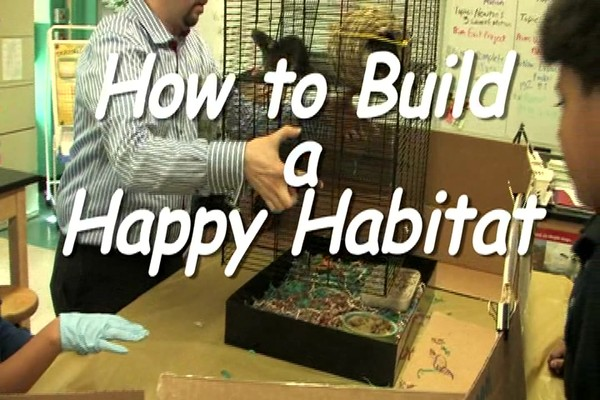 DWARF HAMSTERS - Carefresh happy habitat - image 1 from the video