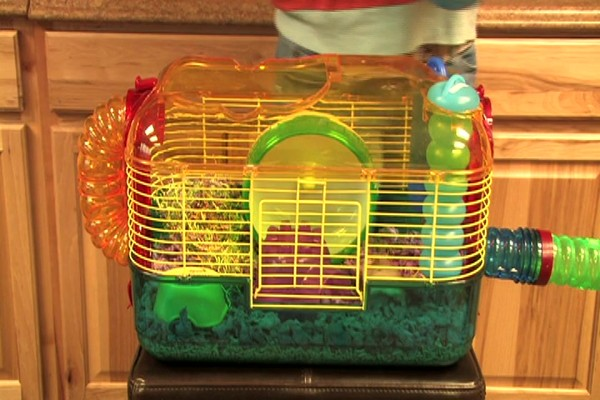 DWARF HAMSTERS - Carefresh happy habitat - image 7 from the video