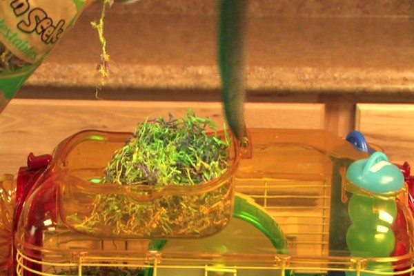 DWARF HAMSTERS - Carefresh happy habitat - image 8 from the video