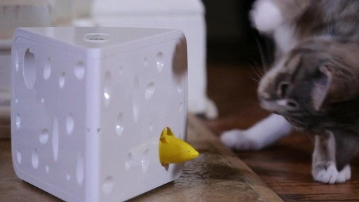 PetSafe Automatic Cheese Cat Toy - image 10 from the video