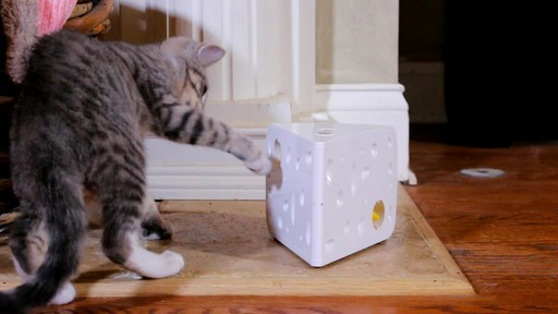 PetSafe Automatic Cheese Cat Toy - image 4 from the video