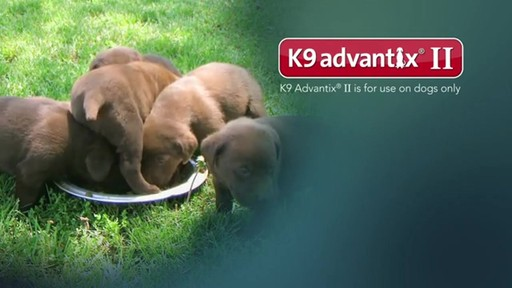 K9 Advantix II Dog Flea & Tick Drops - image 8 from the video