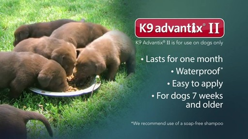 K9 Advantix II Dog Flea & Tick Drops - image 9 from the video