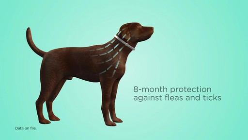 Seresto Flea and Tick Collar - image 8 from the video