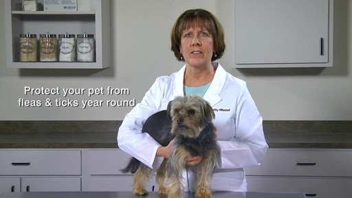 Doctors Foster   Smith Fiprotrol Topical Flea & Tick Control - image 2 from the video