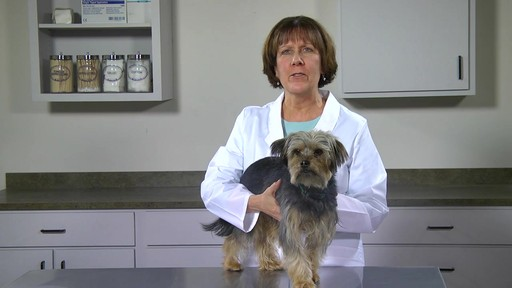 Doctors Foster   Smith Fiprotrol Topical Flea & Tick Control - image 9 from the video