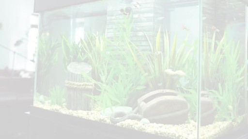 Fluval Accent Aquarium and Cabinet Combo - image 10 from the video