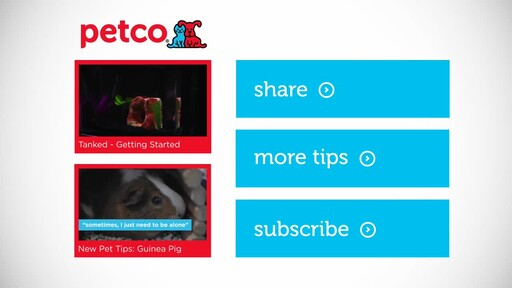 4 Things Your New Fish is Trying to Tell You: New Pet Tips by Petco - image 10 from the video