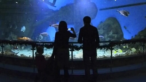 4 Things Your New Fish is Trying to Tell You: New Pet Tips by Petco - image 2 from the video