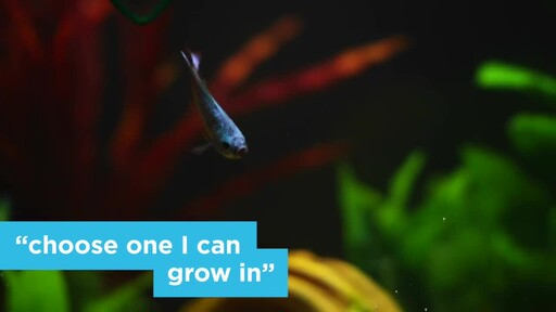 4 Things Your New Fish is Trying to Tell You: New Pet Tips by Petco - image 3 from the video