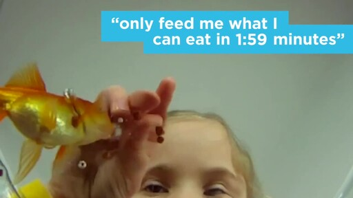 4 Things Your New Fish is Trying to Tell You: New Pet Tips by Petco - image 4 from the video