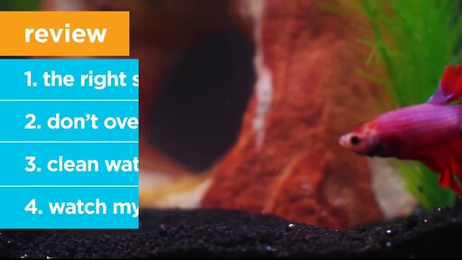 4 Things Your New Fish is Trying to Tell You: New Pet Tips by Petco - image 8 from the video