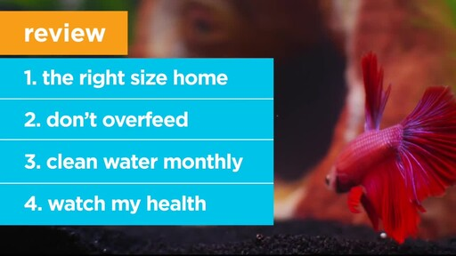 4 Things Your New Fish is Trying to Tell You: New Pet Tips by Petco - image 9 from the video