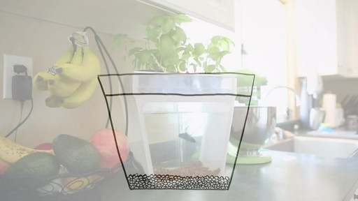 Back to the Roots AquaFarm 3 Gallon Fish Tank - image 3 from the video