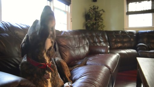 Nylabone Healthy Edibles Giant Size Roast Beef Flavored Dog Bone Chew - image 3 from the video