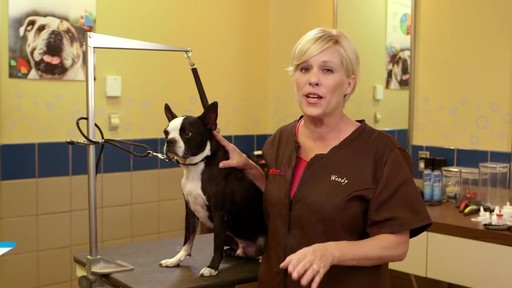How to Cut Your Dog's Nails - image 1 from the video