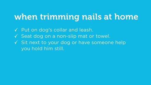 How to Cut Your Dog's Nails - image 10 from the video