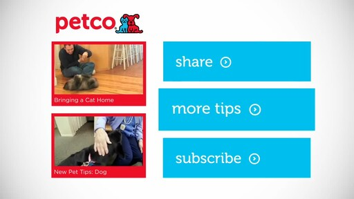 6 Things Your New Cat is Trying to Tell You: New Pet Tips by Petco - image 10 from the video