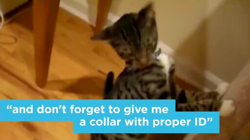 6 Things Your New Cat is Trying to Tell You: New Pet Tips by Petco - image 3 from the video