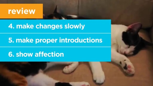 6 Things Your New Cat is Trying to Tell You: New Pet Tips by Petco - image 9 from the video