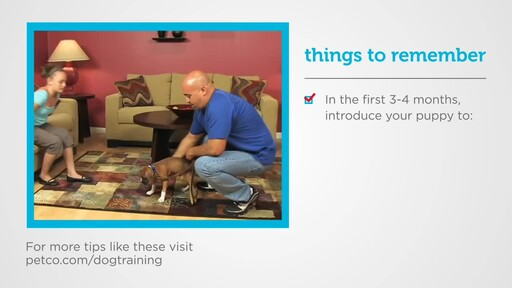 How to Socialize a New Puppy - image 1 from the video