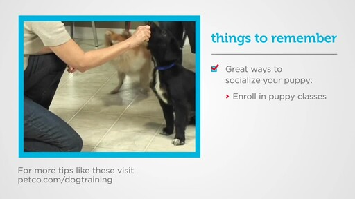 How to Socialize a New Puppy - image 3 from the video