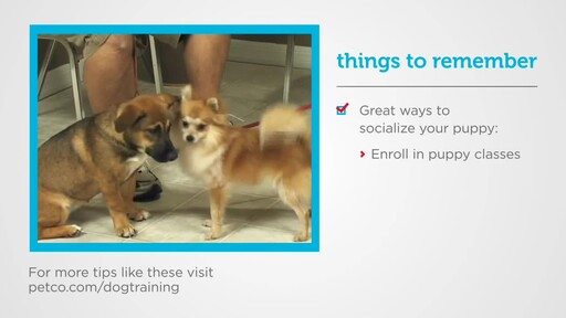 How to Socialize a New Puppy - image 4 from the video