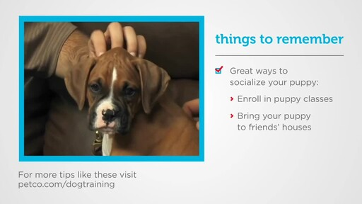 How to Socialize a New Puppy - image 5 from the video