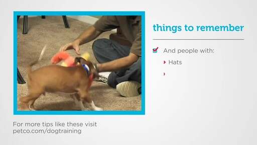How to Socialize a New Puppy - image 6 from the video