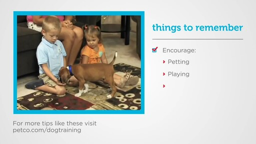 How to Socialize a New Puppy - image 7 from the video