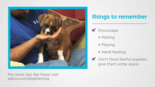 How to Socialize a New Puppy - image 8 from the video