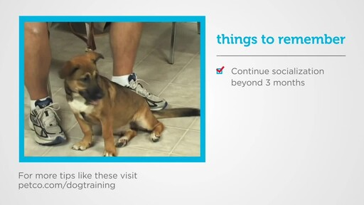How to Socialize a New Puppy - image 9 from the video