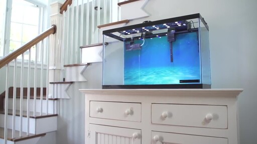 How to Setup a Fish Tank - Marine Saltwater - image 1 from the video