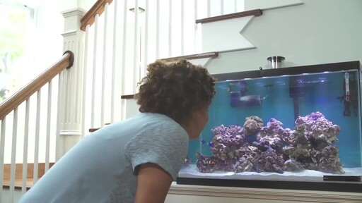 How to Setup a Fish Tank - Marine Saltwater - image 10 from the video