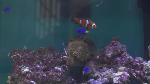 How to Setup a Fish Tank - Marine Saltwater - image 7 from the video