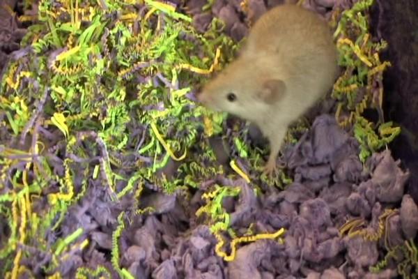 Carefresh Hide N Seek Nestables - image 1 from the video