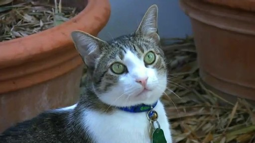 Advantage II Once-A-Month Cat & Kitten Topical Flea Treatment - image 1 from the video