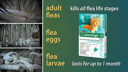 Advantage II Once-A-Month Cat & Kitten Topical Flea Treatment - image 7 from the video