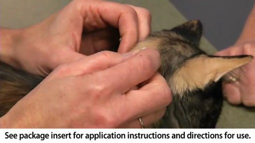 Advantage II Once-A-Month Cat & Kitten Topical Flea Treatment - image 8 from the video