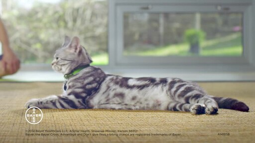 Advantage II Once-A-Month Cat & Kitten Topical Flea Treatment - image 9 from the video