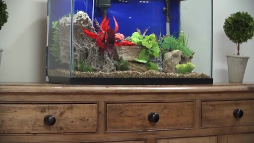 How to Setup a Fish Tank - Freshwater - image 3 from the video