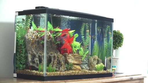 How to Setup a Fish Tank - Freshwater - image 4 from the video