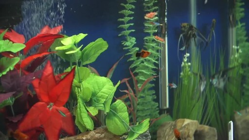 How to Setup a Fish Tank - Freshwater - image 5 from the video