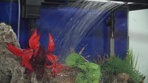 How to setup a fish tank freshwater petco video for Petco live fish