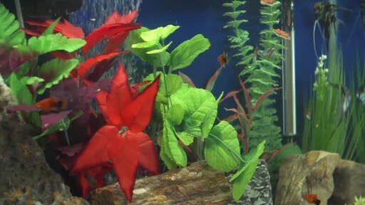 How to Setup a Fish Tank - Freshwater - image 8 from the video