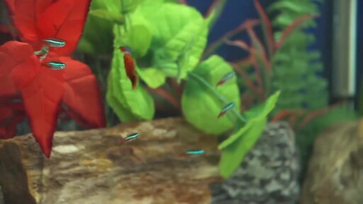 How to Setup a Fish Tank - Freshwater - image 9 from the video