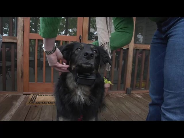 Receiver Collar - PetSafe Wireless Mapping Fence Extra Receiver Collar - image 1 from the video