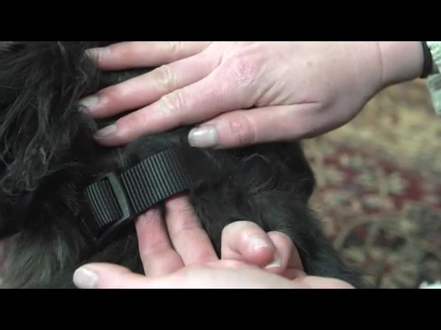 Receiver Collar - PetSafe Wireless Mapping Fence Extra Receiver Collar - image 8 from the video